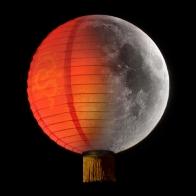 LunarNewYear_MSO_EventImage.jpg