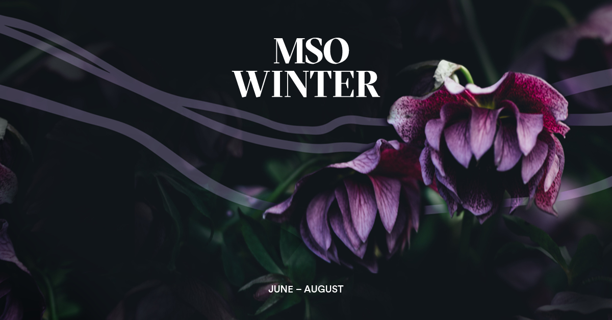 Autumn with MSO